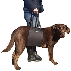 canine support sling harness vet veterinarian knee injury acl mcl ccl patella veterinarian surgery