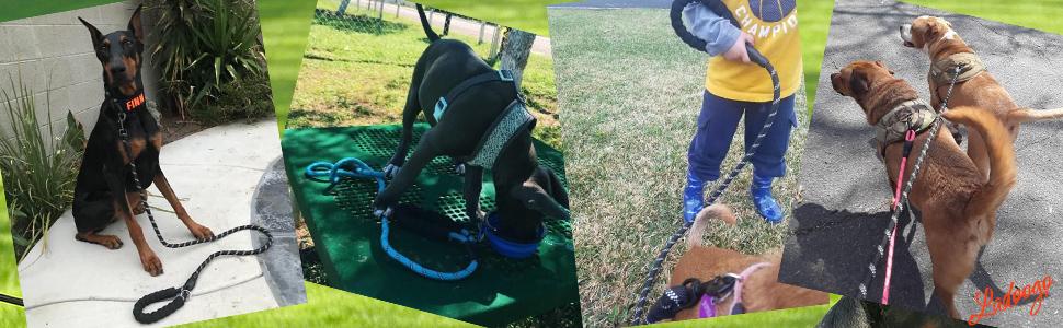 dog leash green