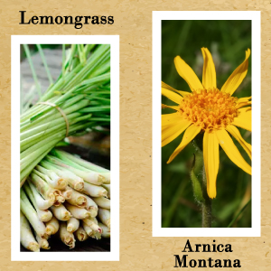 Arnica Montana Lemongrass Essential Oil Lotion Cream Sore Muscle Stiff Joints Athletic Sport