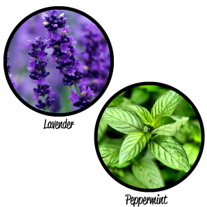 Lavender Peppermint Mint Essential Oil Relax Relaxation Muscle Joint Massage Therapeutic