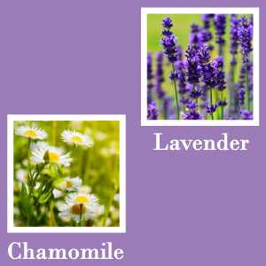Essential Oils Lavender Chamomile Anxiety back stress back neck muscle pain ache joint chiropractor