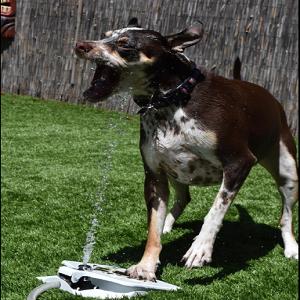 pet supplies dog pet water fountain api doggie fountain pet self