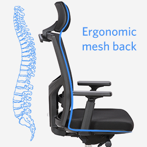 Ergonomic Mesh Back