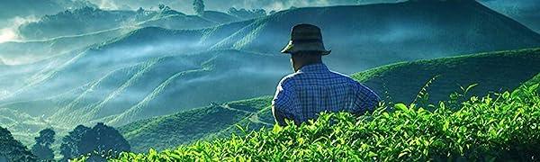 specialty artisan tea