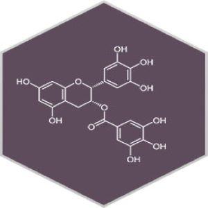 EPIGALLOCATECHIN-3-GALLATE (EGCC)