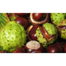 Natural Horse Chestnut proven support for CVI, or Chronic Venous Insufficiency