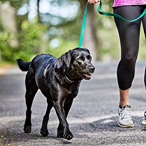 DogWatch. SideWalker, Training Collar, Dog Leash, Gentle-Leader, Choke Chain, Stop Pulling on Leash
