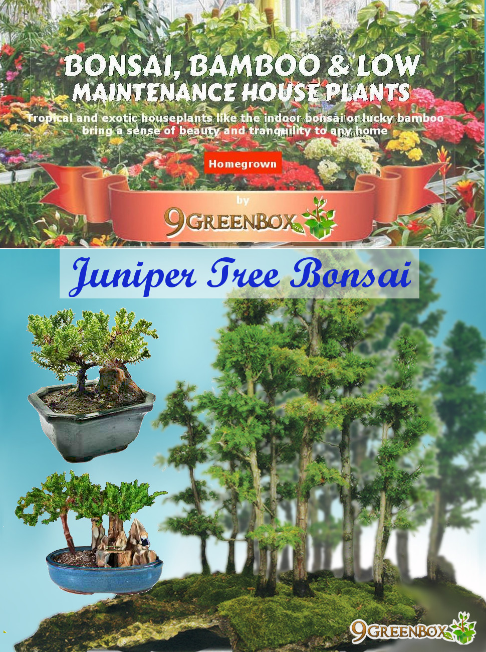 bonsai or is a japanese art form of growing trees or shrubs in containers that depressed their growth this art is practiced repeatedly