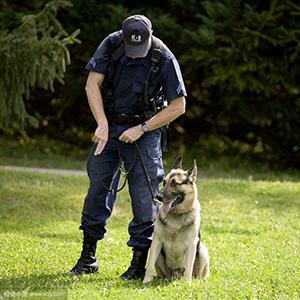 6 ft dog leather leash