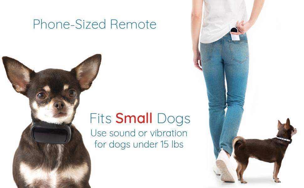 small remote collar