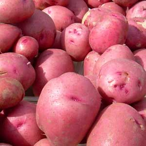 1 lb Seed Potatoes RED PONTIAC Organic Non GMO SPRING SHIPPING NOW