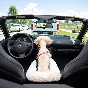 Snoozer Pet Products, Pet Travel, Dog Car Seat, Lookout, Console, Safety