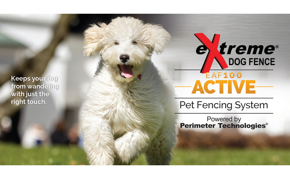 how to train your dog on its electric fence