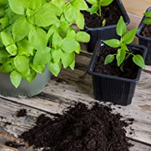 非常适合种苗,可用于盆栽或地面移植