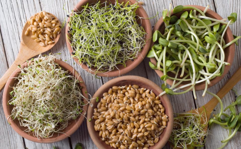 alfalfa mung bean radish broccoli sprouting seeds sprouter sprouting jar lid kit mason