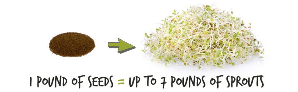 one pound of alfalfa seeds equals seven pounds of sprouts how much sprouts to alfalfa seeds make