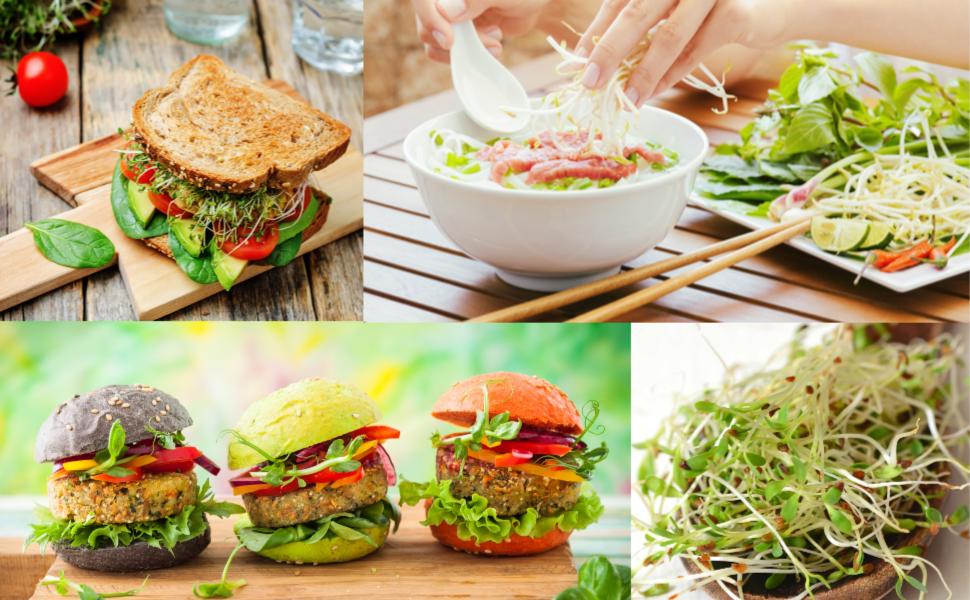 how to make homemade sprouts ebook diy at home healthy nutritious alfalfa mung bean broccoli radish