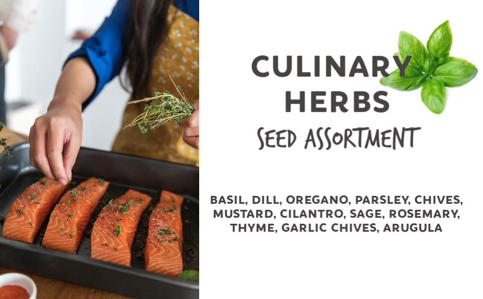 culinary herb seeds basil dill oregano parsley chives mustard cilantro sage rosemary thyme garlic