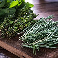parsley sage rosemary thyme culinary herb seeds for planting indoors