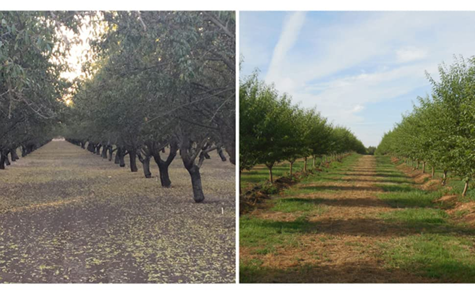 Conventional Sterile Almond Orchard vs. Wild Soil Almond Orchard