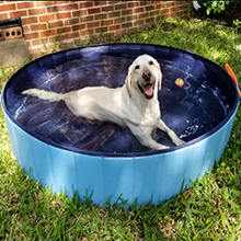 piscine pour chiens