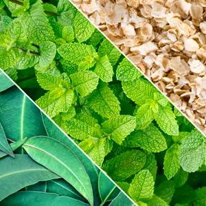 Defense Gift Bar Set Original Peppermint Blemish Soap Eucalyptus Tea Tree Oatmeal