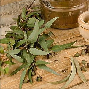 Defense Soap Oatmeal Eucalyptus Tea Tree Oil Exfoliate Triple Milled Natural Essential