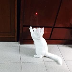 Cat Laser Pointer Toy