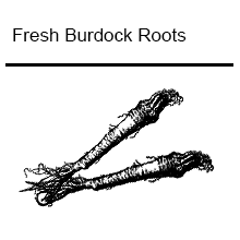 Fresh Burdock Root Tea