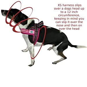 Terrier wearing the LED Dog Harness which makes walks much more enjoyable.
