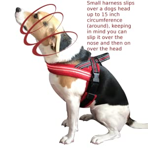 Neddy, a beagle/terrier wearing the LED dog harness by It's Ridic.  The perfect way to walk a dog.