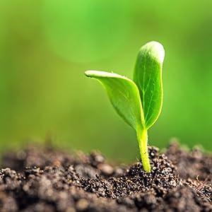 Earth's Wisdom Multivitamin has pure ingredients