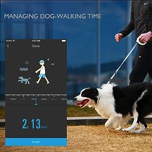petkit smart dog leash