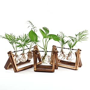 bulb planter  Ivolador Desktop Glass Planter Bulb Vase with Retro Solid Wooden Stand and Metal Swivel Holder for Hydroponics Plants Home Garden Wedding Decor (3 Bulb Vase) 400f4f01 043e 4a4f a804 1d5e9d7fa38c