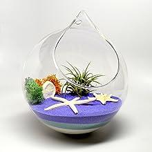 hanging planter terrarium