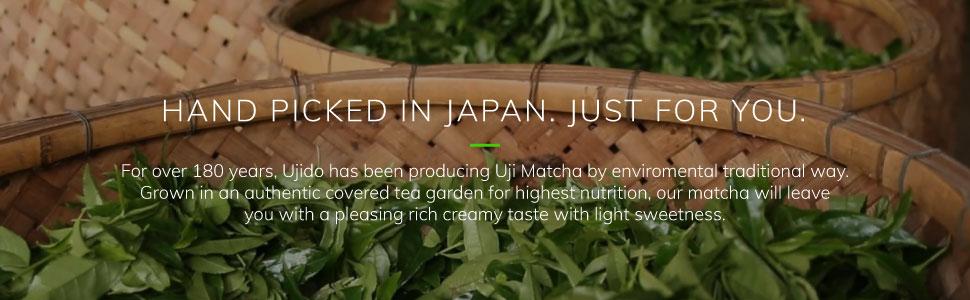 ujido, matcha, tea, powder, leaves, hand picked, japan, creamy, taste, light, sweetness, tradition