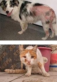 medicated dog shampoo, arava dead sea pet spa