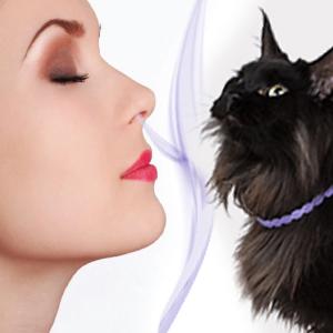 flea collar for cats