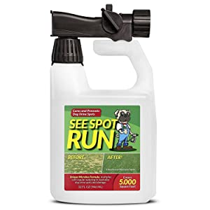 See Spot Run Prevents and Heals Grass Burns caused by Dog Urine