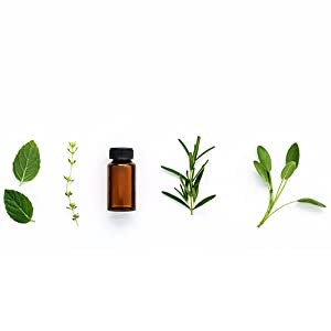 Essential Oil Herbs
