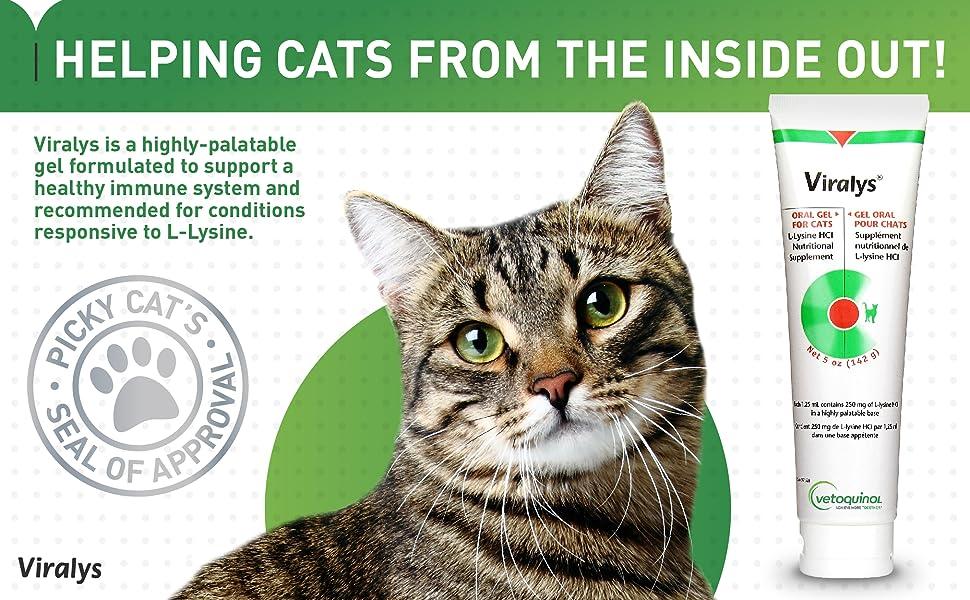 Viralys Lysine Supplement Cats Sneezing Runny Nose Conjunctivitis Immune System Support Maple Flavor