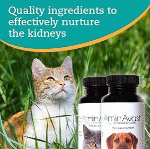 Amazon Com Aminavast Kidney Support Supplement For Cats