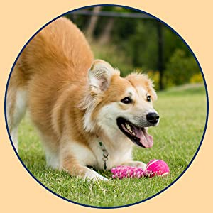 Helps Soothe Your Dog's  Digestive Tract