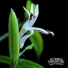 andrographis elderberry echinacea cold flu symptoms oscillococcinum natural herbal immune support