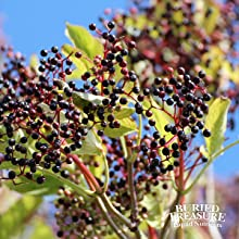 cold medicine elderberry syrup medication airborne gummies zarbees elderberries natural calm flu