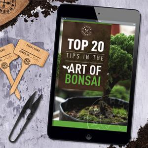 ebook bonsai