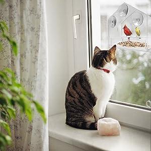 Cat Sees Bird