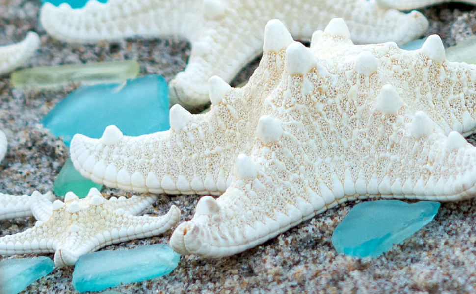 Knobby white starfish with frosted blue sea glass laying on the beach sand