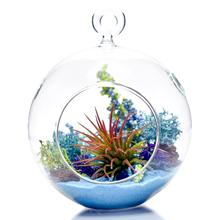 terrarium glass stand figurine Ornament real ocean sea beach wedding crush home decor decorate