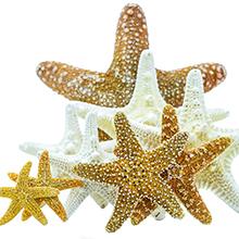 Starfish and Jungle Starfish